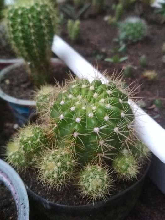 Cactus Y Aloes