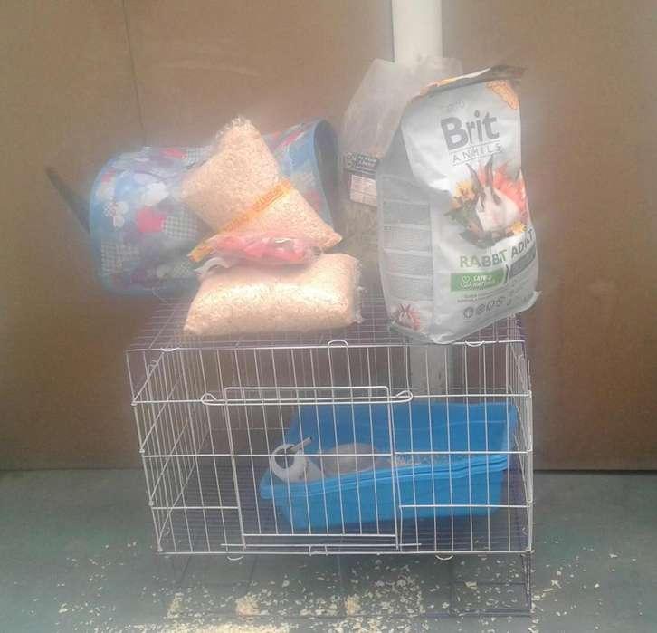 Jaula para conejo, accesorios y comida