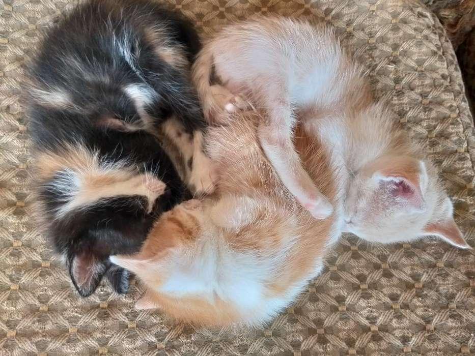 Adopción de Gatos Resposable.