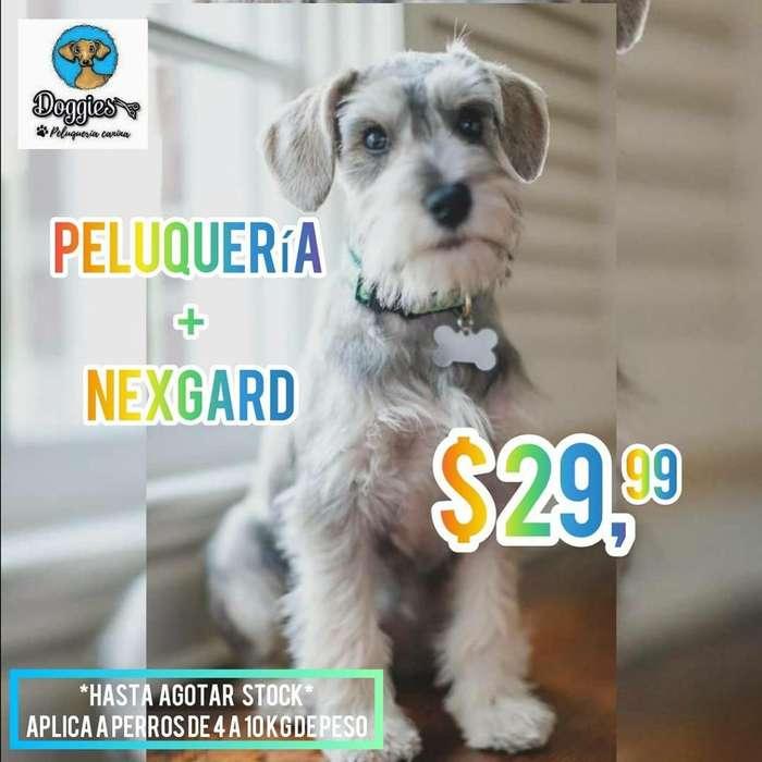 Peluquería Canina Nexgard