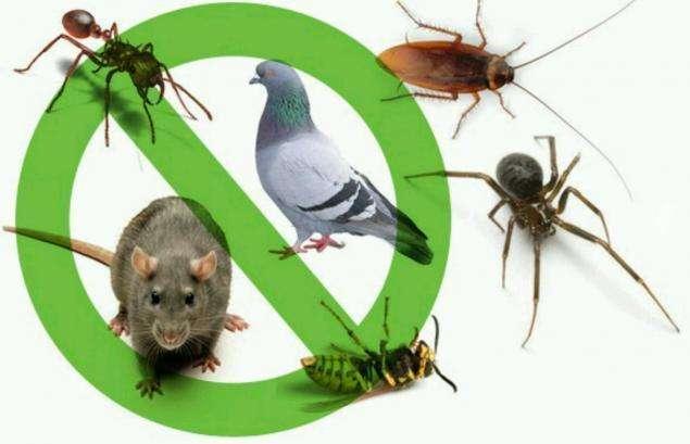 VENTA de Estaciones cebaderas o' trampas para ratas ratones FUMIGACION Y CONTROL DE PLAGAS ratas cucarachas pulgas