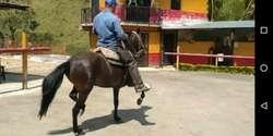 6 Equinos Yegua Y Caballo Razudos