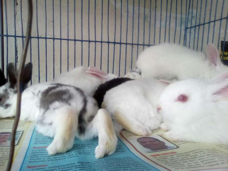 Lundos Conejos