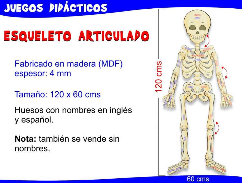 Esqueleto Articulado