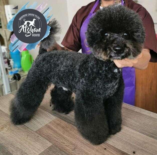 curso de <strong>peluqueria</strong> canina basica comercial