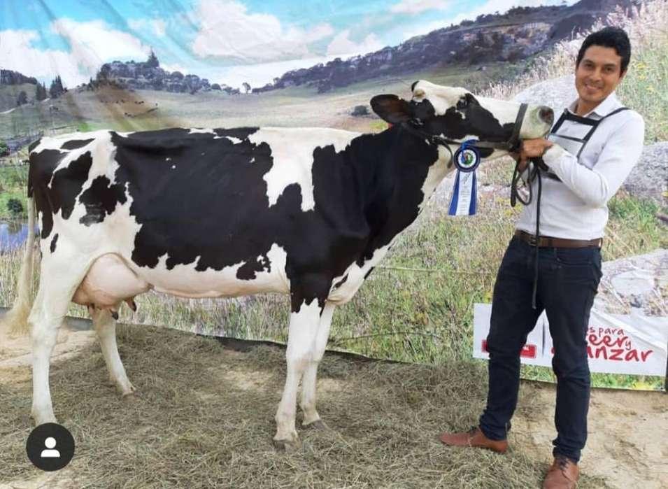 Vendo Excelente Vaca