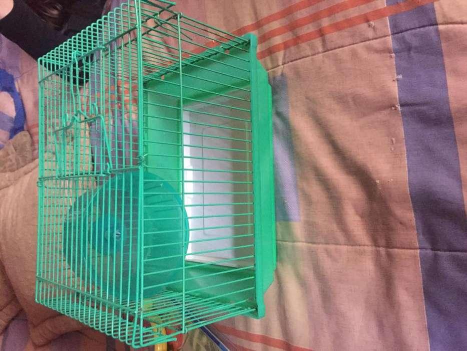<strong>jaula</strong> para hamster