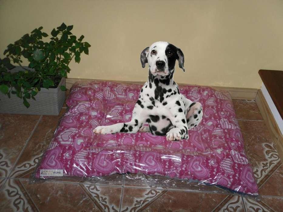 Super precios!!! Almohadón para mascotas 78 x 78 cm 450 pesos
