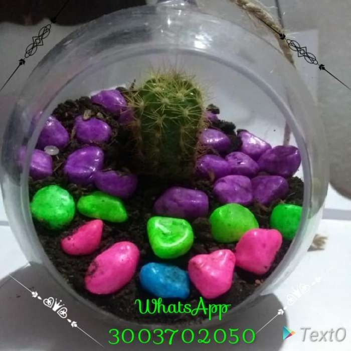 Se Venden Cactis Pequeños a Buen Precio