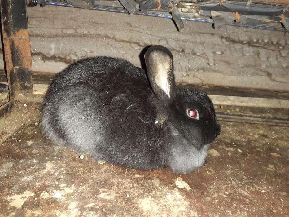 Venta de Conejos de Casa