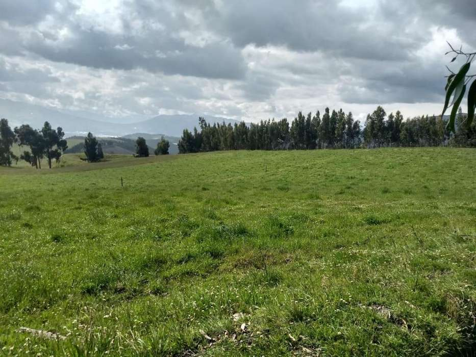 Hermosa finca de 100 hectáreas