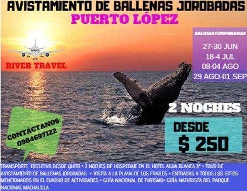 Tour avistamiento de ballenas jorobadas