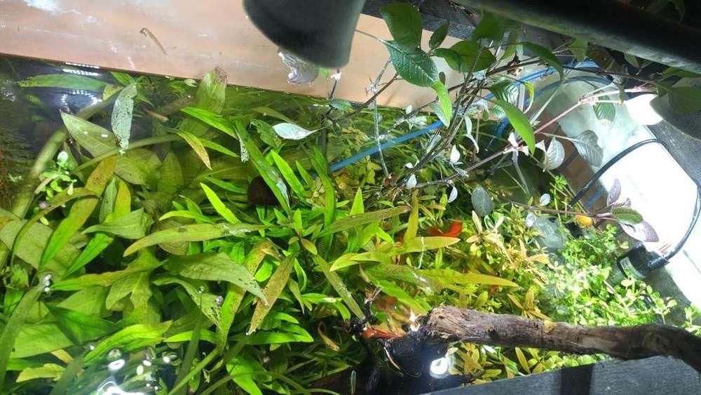 Plantas de Acuario a Solo 1