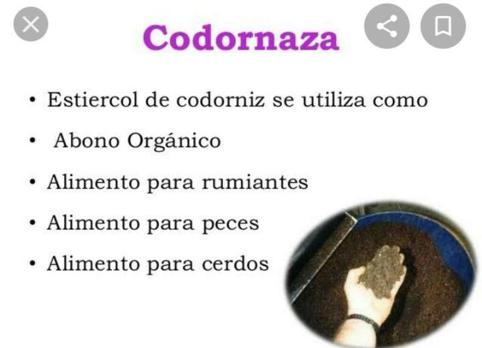 Codornaza/guano de Codorniz
