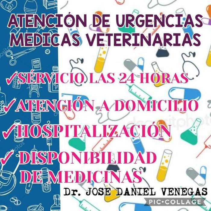 Servicio Médico Veterinario a Domicilio