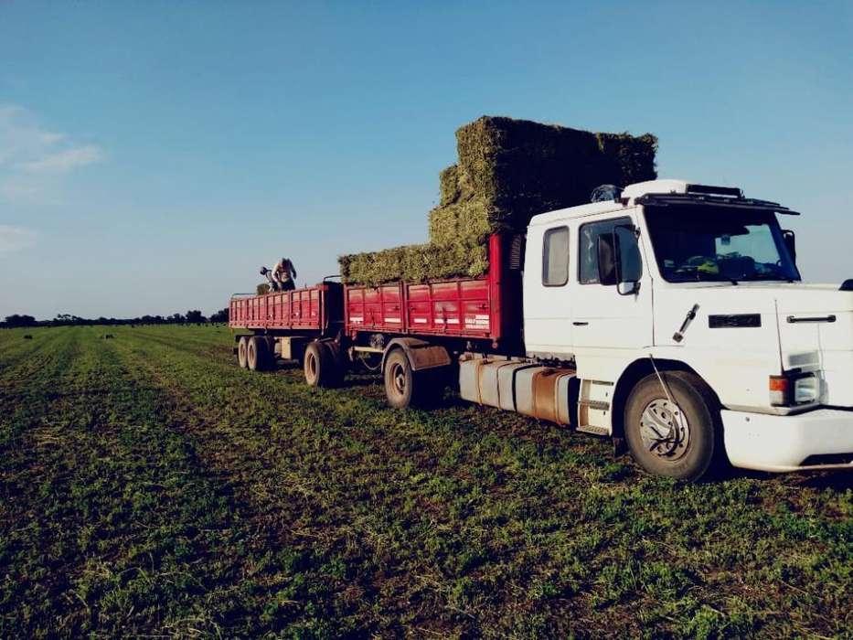 Se Vende Alfalfa