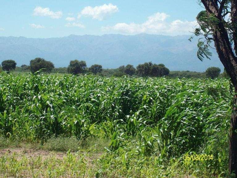Venta Loteo Rural - Ruta 16 1500 - San Luis