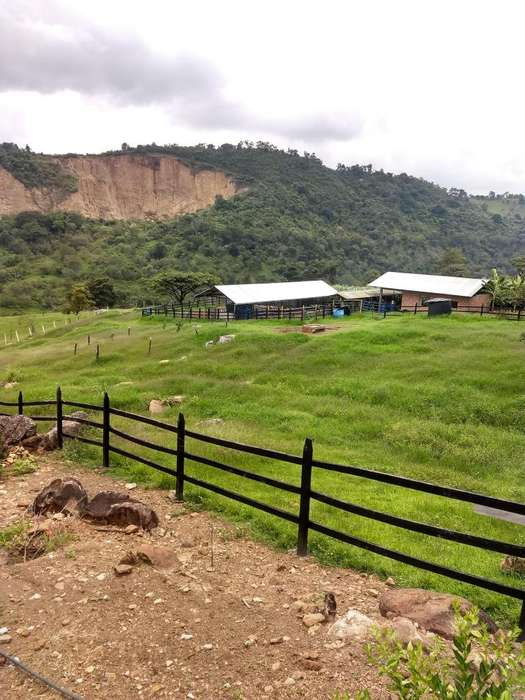 FINCA VEREDA SAN JOSE MUNICIPIO ARBELAEZ 36.5 FANEGADAS 233.600M2 PRODUCTIVAS.