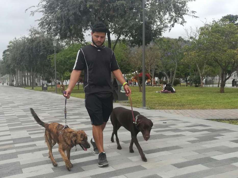 Paseo Mascota