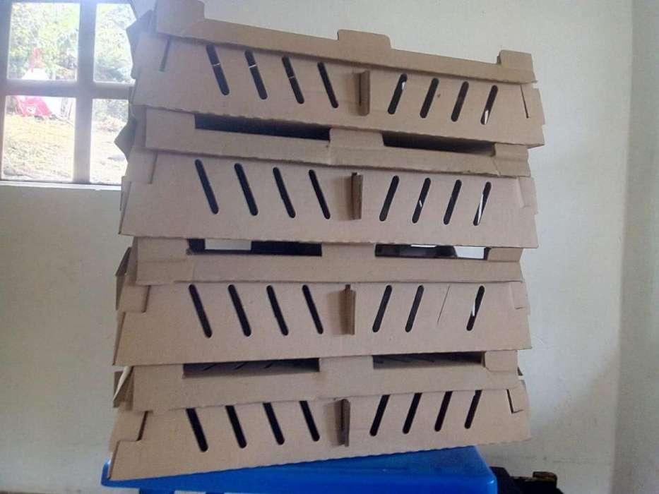 Cajas transporte pollos, <strong>patos</strong>, pavos de 1 día o pequeños