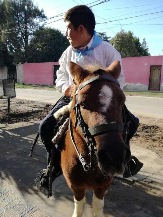 Vendo Pony