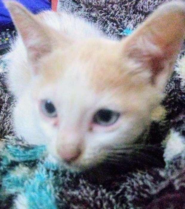 Se Da en Adopcion 3 Gatos