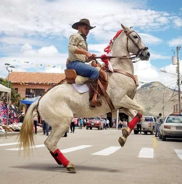 <strong>caballo</strong> Hispano Arabe