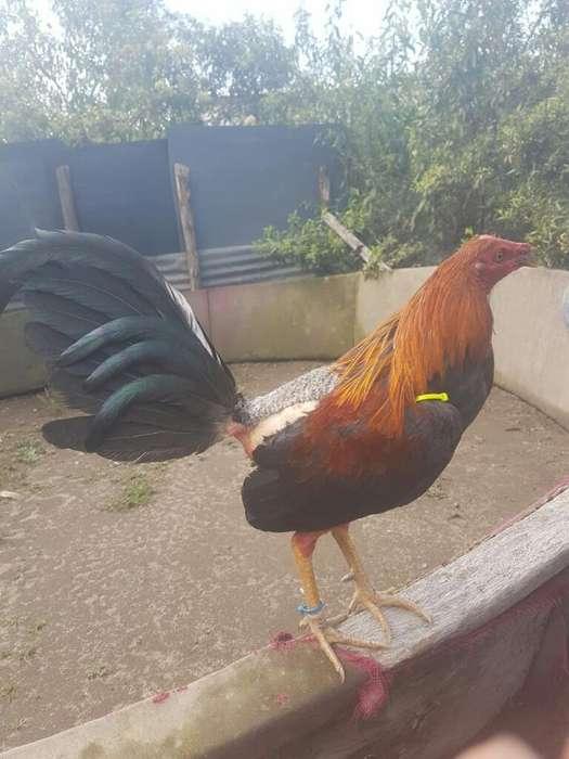 Bonitas <strong>aves</strong>