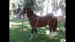 Yeguas Criollas