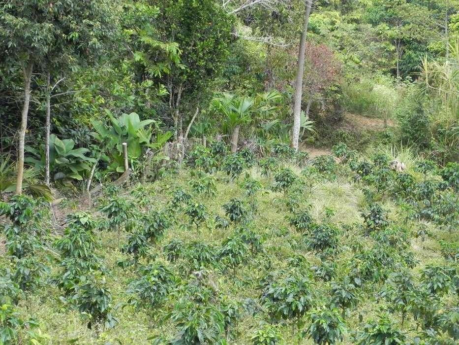 Finca Cafetera zona rural de Bugalagrande - Valle del Cauca