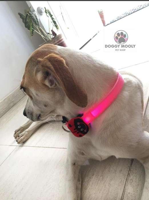 Collar con Luz para Mascotas