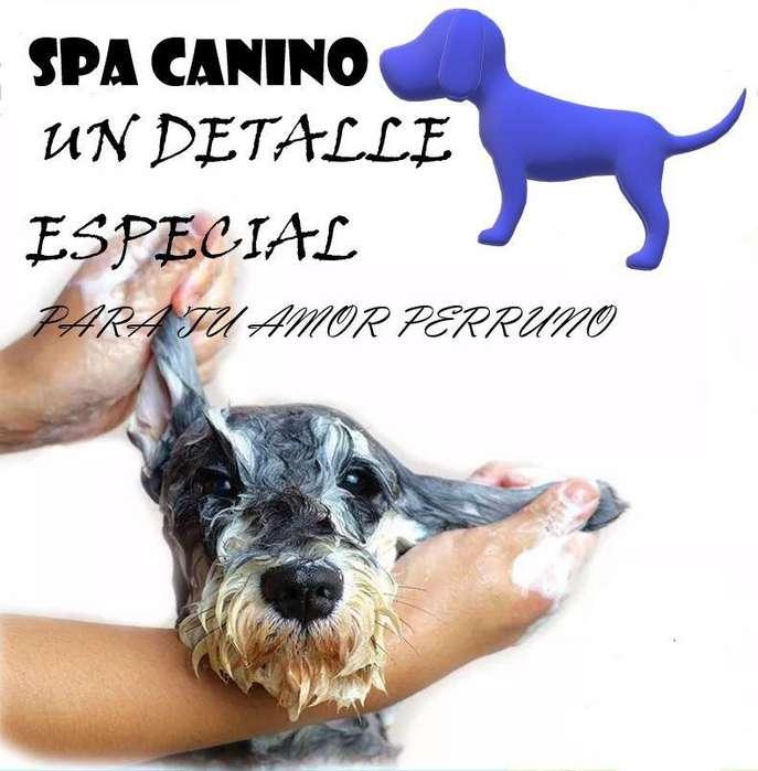Super Promo Spa Dog 15%