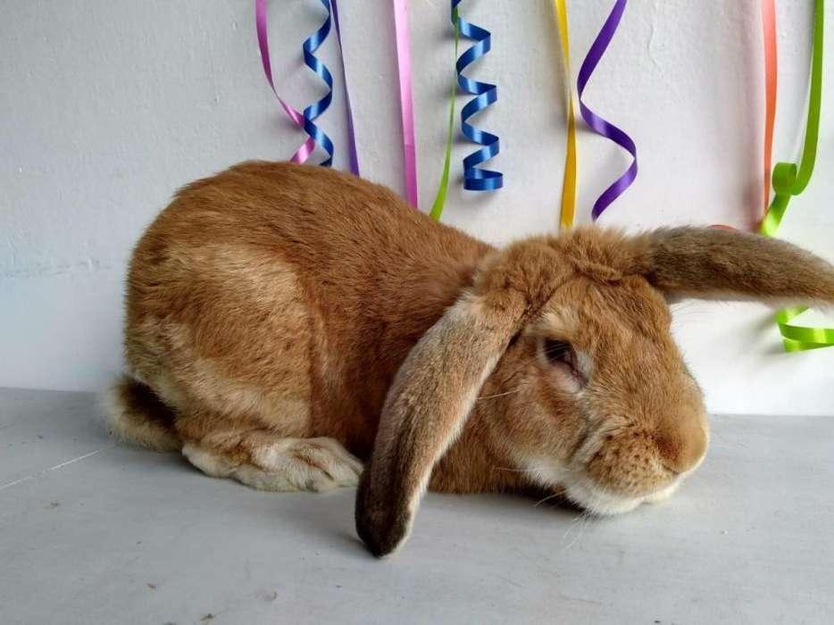 Criadero de Conejos en Bogotá 3224499925
