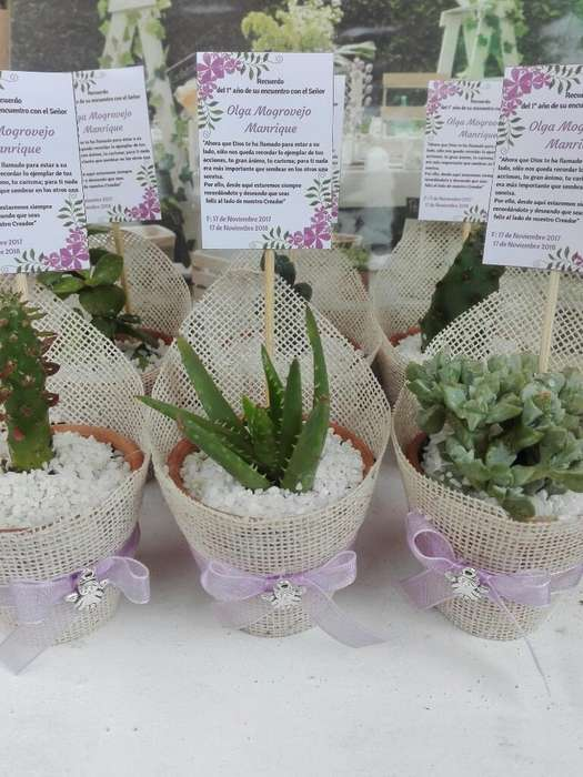 Recuerdos con Suculentas Y Cactus
