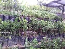 Vivero Naturaleza Verde Agroforestal