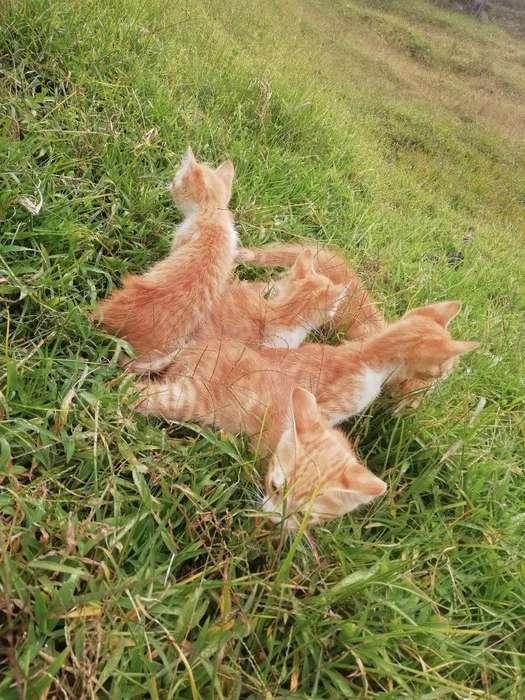 Se Venden Gatos Angora