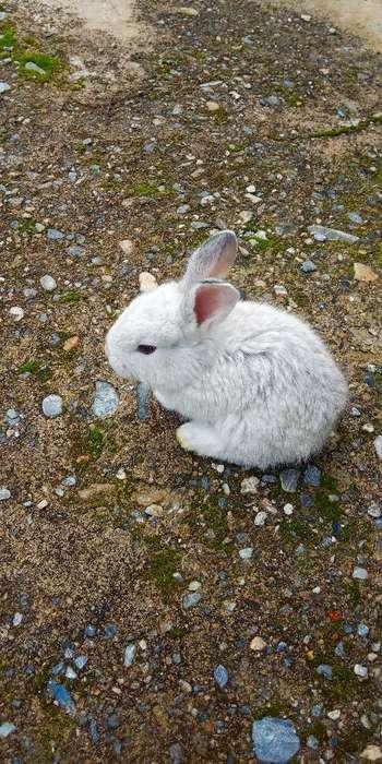 Conejos Raza Cebú Y Cabezas de León