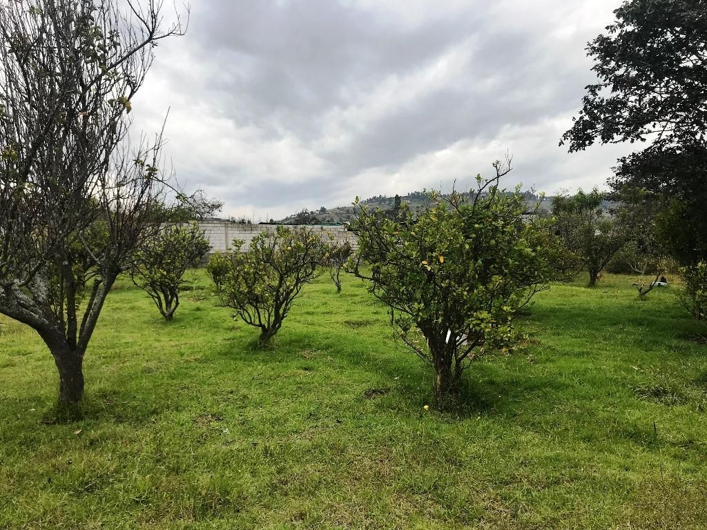 Venta Terreno, Sector de Tumbaco Altura de La Morita por El Lado de La Ruta Viva