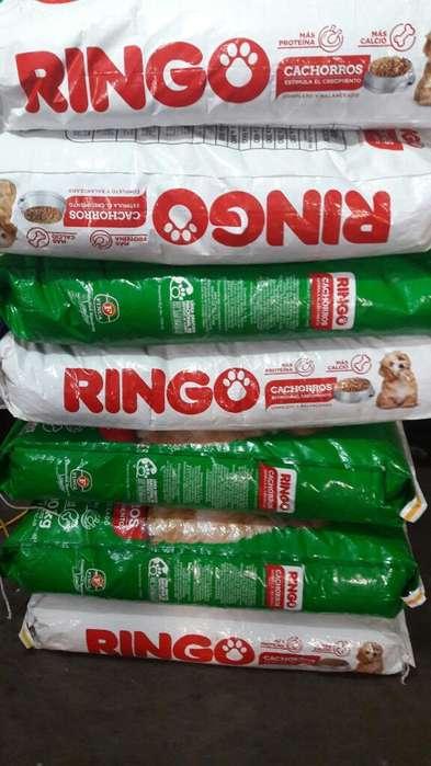 en Ibarra Vendo Ringo <strong>cachorro</strong>s