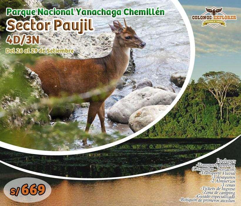 PARQUE NACIONAL YANACHAGA CHEMILLÉN / 967 514 161