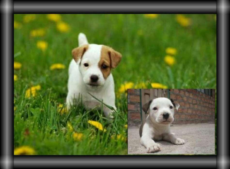 Recibo en Adopcion <strong>cachorro</strong>