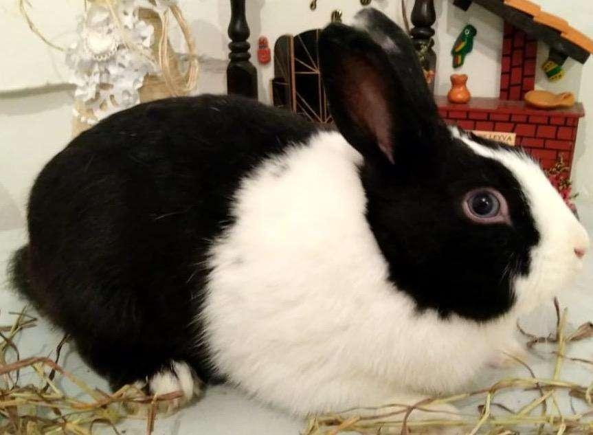 Conejos Enanos Bogotá 3224499925