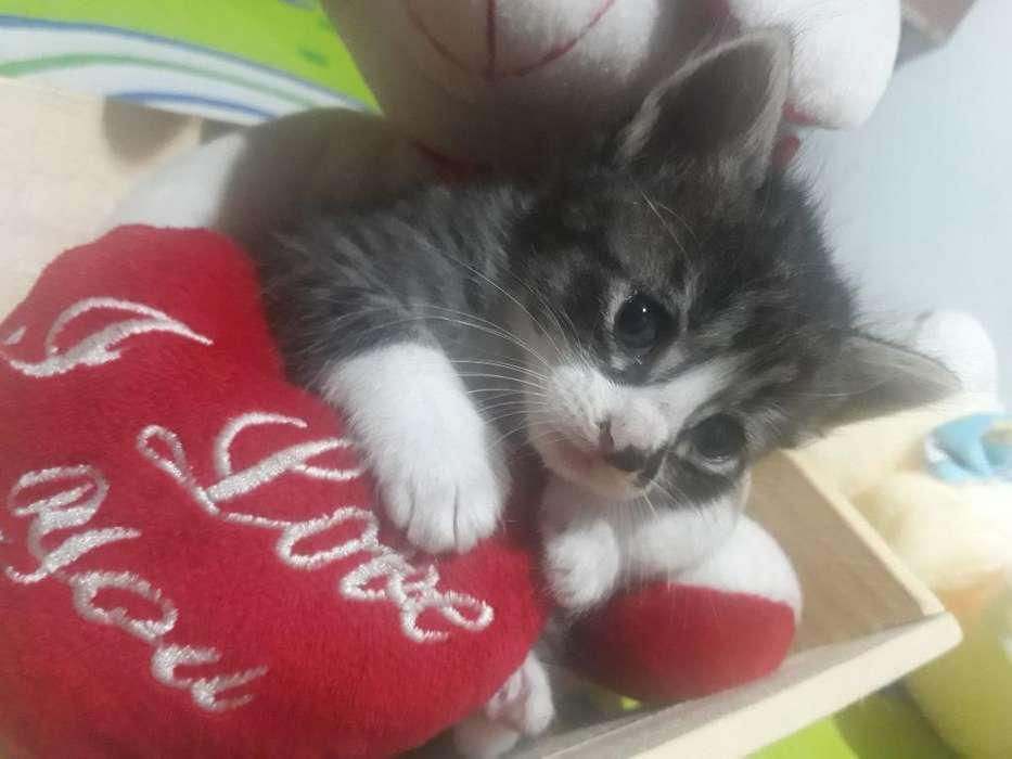 en Adopcion Hermosos Gatos
