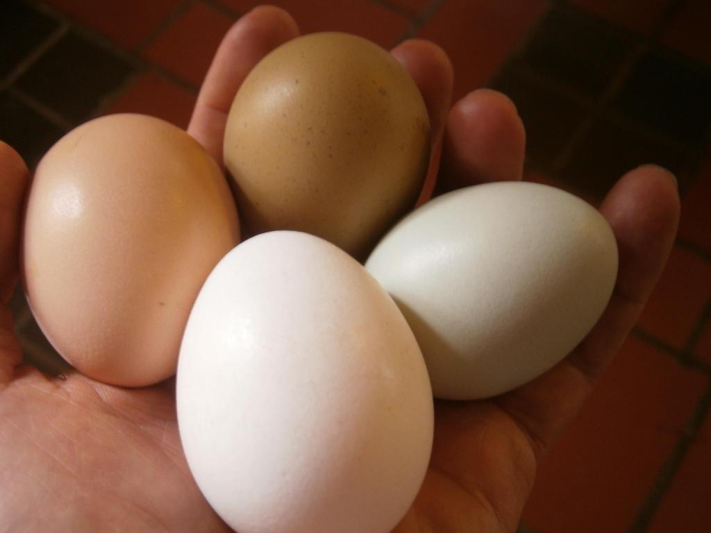 Venta de Huevos fértiles, de gallinas criollas.