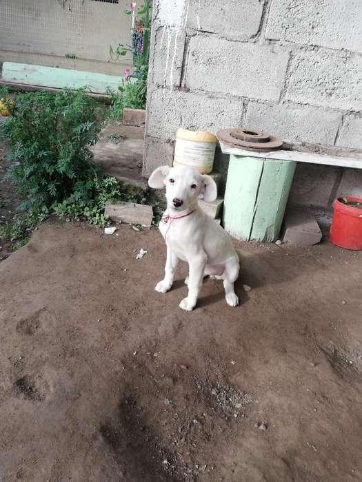 Doy en Adopción Una Hermosa Cachorrita