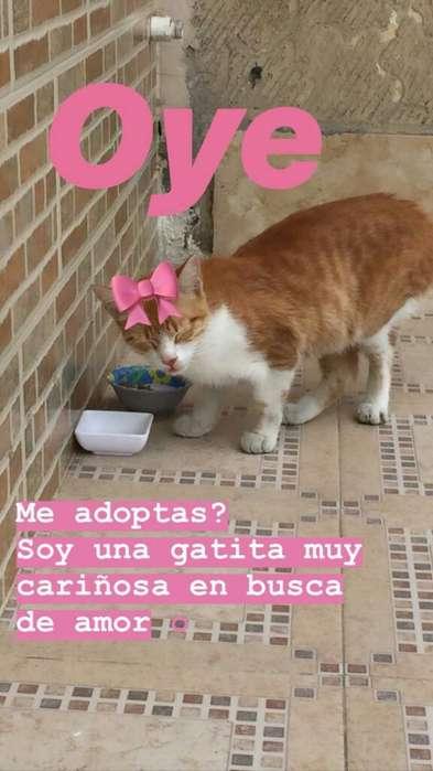 Gatica Amorosa en Adopcion Responsable
