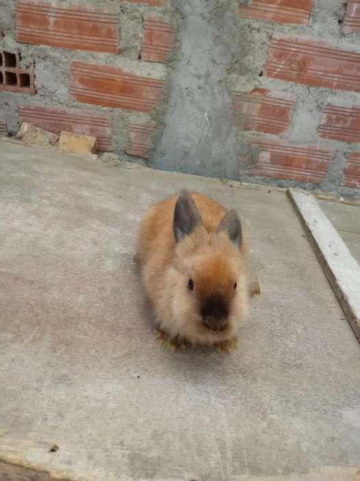 Se Vende Conejo. Presio de Locura