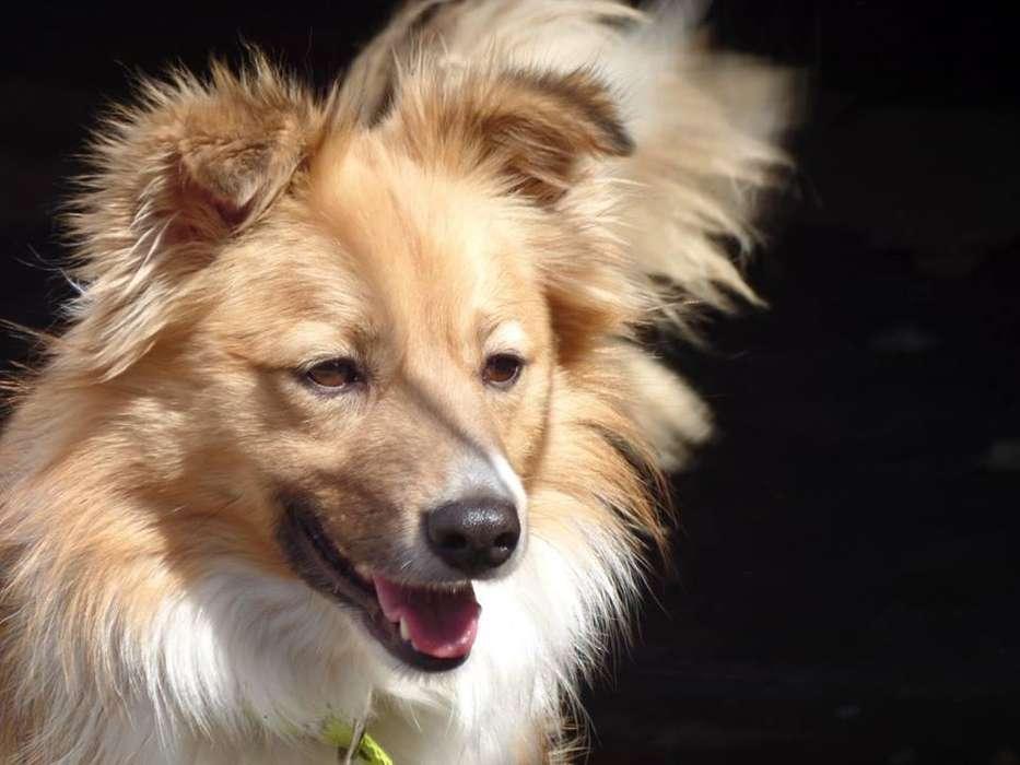 Perro macho tamaño mediano en adopcion! Diablito