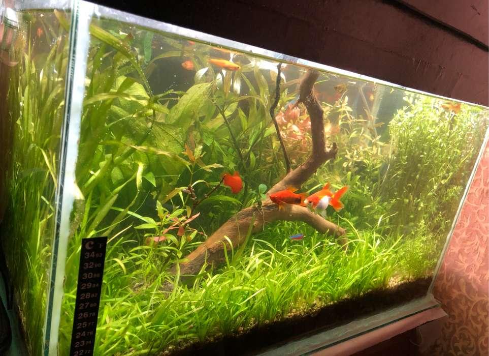 Plantas de acuario, podas para peceras