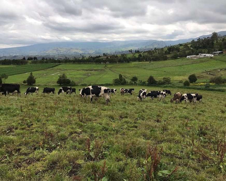 Vaconas Y <strong>vaca</strong>s de Venta